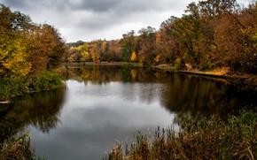 Картинка осень, листья, вода, деревья, ветки, озеро