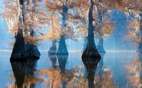 Картинка природа, утро, Caddo Lake