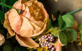 Картинка цветы, роза, цветочки