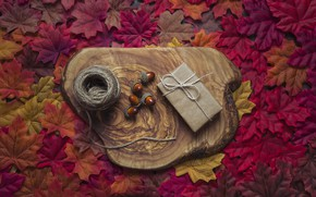 Картинка осень, листья, фон, дерево, colorful, клен, wood, желуди, background, autumn, leaves, осенние, maple