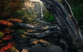 Картинка осень, горы, природа, камни, листва, водопад, ствол, коряга, кусты, водоем, осенняя