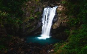 Картинка лес, темный фон, камни, растительность, водопад, поток