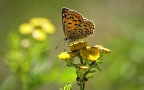 Картинка цветок, бабочка, butterfly