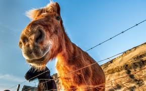 Картинка небо, забор, Icelandic Horse