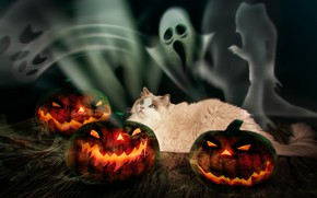 Картинка осень, кошка, кот, взгляд, темный фон, страх, огонь, праздник, доски, фотошоп, тыквы, лежит, призраки, хэллоуин, ...