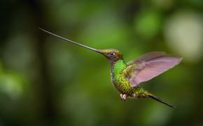 Картинка полет, клюв, колибри, flight, hummingbird, beak, Petr Simon