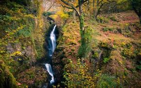 Картинка осень, лес, ручей, водопад