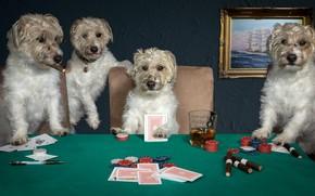 Картинка собаки, карты, игра