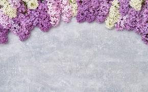 Картинка цветы, wood, flowers, сирень, romantic, lilac