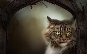 Картинка кот, взгляд, ветки, мордочка, котэ