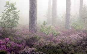 Картинка лес, лето, туман