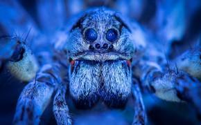 Картинка макро, паук, красавец, голубой свет, арахна, космос в глазах