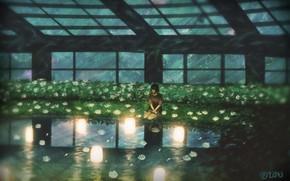 Картинка небо, девушка, ночь, фонари, водоем, оранжерея