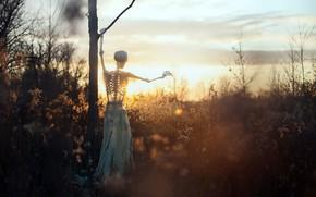 Картинка природа, скелет, закат