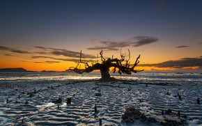 Картинка дерево, отлив, Индонезия, зарево, остров Ломбок, Awang Beach