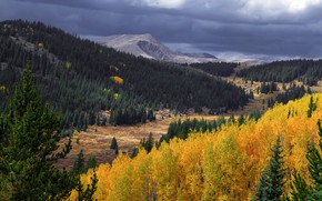 Картинка осень, лес, небо, горы, тучи, склоны, желтые, ели, лесной массив