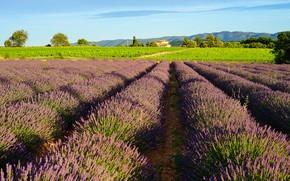 Картинка зелень, поле, лето, свет, деревья, пейзаж, цветы, горы, природа, дом, холмы, Франция, тени, домик, грядки, …