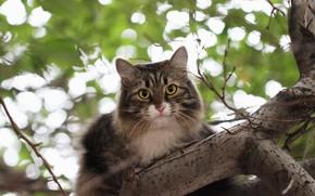 Картинка кот, фон, дерево, боке