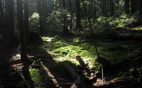 Картинка лес, деревья, природа, Канада