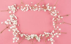 Картинка цветы, white, белые, розовый фон, pink, flowers, background, tender, frame, floral