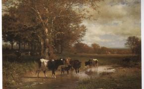 Картинка телёнок, HART, CATTLE BY A SREAM, коровы пьют