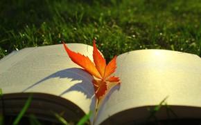 Картинка осень, трава, свет, красный, природа, поляна, листок, тени, книга, боке, осенний листок, раскрытая книга