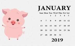Картинка свинья, поросенок, календарь на 2019 год