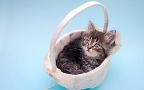 Картинка взгляд, котенок, пушистый, малыш, корзинка