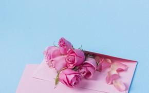 Картинка фон, розы, лепестки, бутоны, гоубой