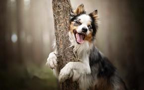 Картинка друг, дерево, собака