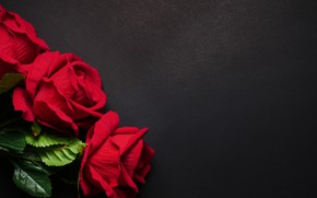 Картинка цветы, розы, красные, red, черный фон, flowers, roses
