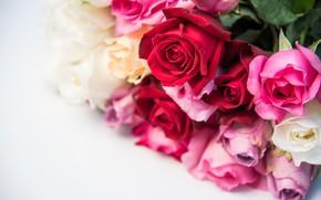 Обои цветы, розы, букет, red, бутоны, pink, flowers, romantic, roses