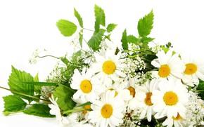 Картинка цветы, ромашки, букет