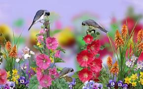 Картинка grafika, kwiaty, ptaszki