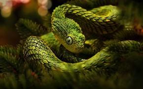 Картинка шипы, зелёная, змея древесная