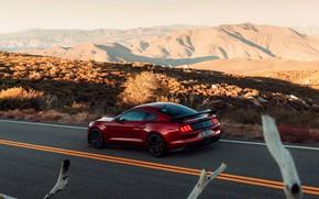 Картинка дорога, Mustang, Ford, Shelby, GT500, кровавый, 2019
