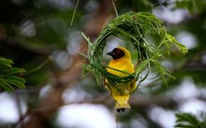 Картинка зелень, трава, птица, ветка, рамка, гнездо, желтая, боке
