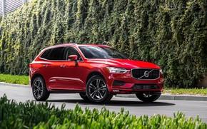 Картинка дорога, car, машина, Volvo, red, сбоку, красная машина, колёса, кроссовер, red car, XC60, живая изгородь, …