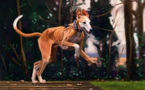 Картинка осень, природа, собака, by Meorow