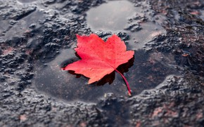 Картинка красный, лист, лужа, red, leaf, puddle