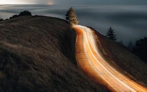 Картинка дорога, деревья, ночь, выдержка