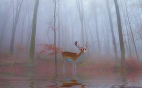 Картинка лес, туман, рендеринг, берег, олень, утро, арт, олененок, водоем, фотоарт, бэмби