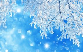 Картинка зима, иней, свет, снег, ветки, природа, блики, мороз, Новый год, звездочки, голубой фон, боке, заснеженные, …
