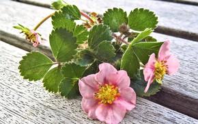 Обои Цветы, весна, земляника, цветение