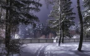 Картинка зима, лес, снег, деревья, забор, Украина, тропинка, Коростышев, Александр Чорный