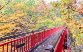 Картинка осень, листья, деревья, мост, парк, colorful, landscape, bridge, park, autumn, leaves, tree, path, fall
