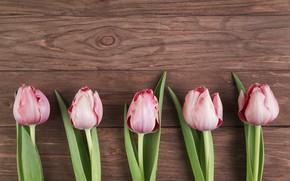 Картинка цветы, тюльпаны, розовые, wood, pink, flowers, beautiful, tulips, spring
