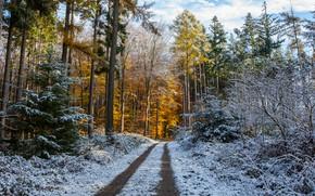 Обои зима, иней, дорога, осень, лес, небо, снег, деревья, ветки, природа, парк, стволы, желтые, ели, дорожка, ...