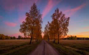 Картинка дорога, поле, осень, небо, облака, деревья, пейзаж, закат, природа, листва, оранжевая, вечер, простор, березы, рыжая, …
