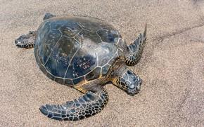 Картинка песок, солнце, крупный план, черепаха